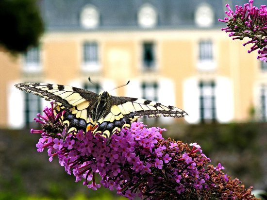 Chateau de la Barre : A butterfly in the garden.