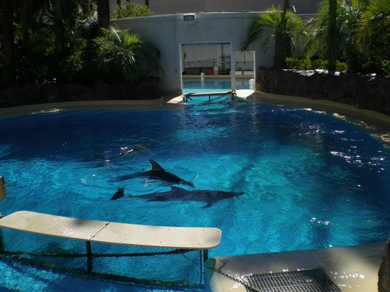 The Miss 39 S Picture Of Siegfried Roy 39 S Secret Garden And Dolphin Habitat Las Vegas Tripadvisor