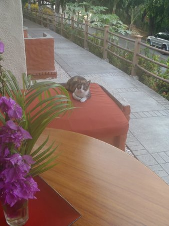Hotel Condovac la Costa: Condovac's 'timeshare kitty'.  Has to find a new owner each week!