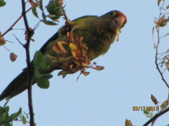 Condovac la Costa: Close up of the parrot