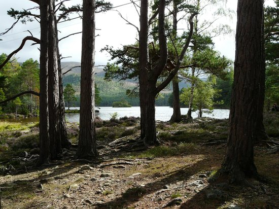Loch an Eilein: Beautiful end of the trails