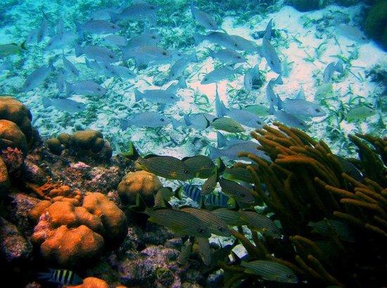 Reserva Marina Hol Chan: fish