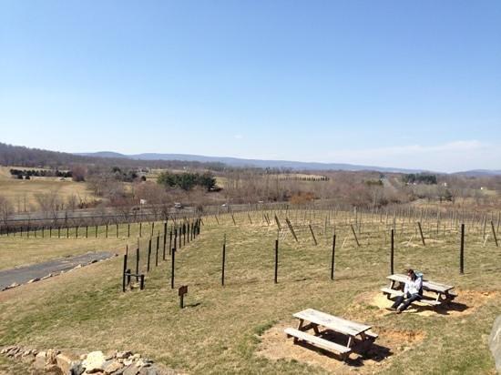 Barrel Oak Winery: view from outside deck
