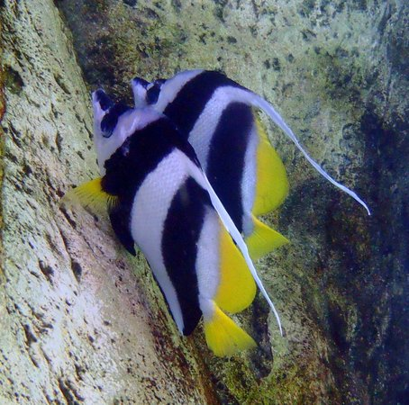 angel fish in salt water cove picture of discovery cove orlando