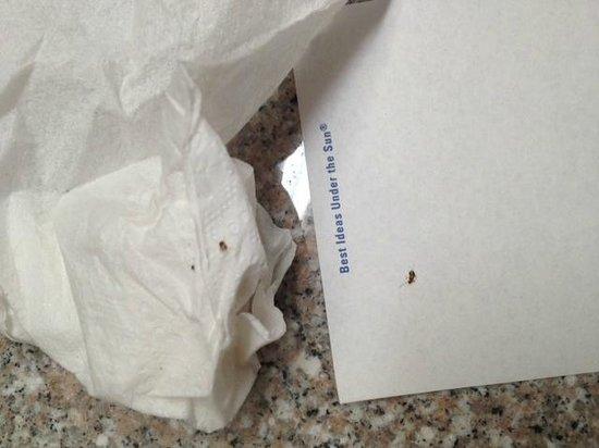 Days Inn Kissimmee FL: Dead bugs in room