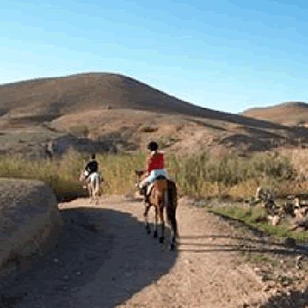 Riad Oussagou : Hors riding