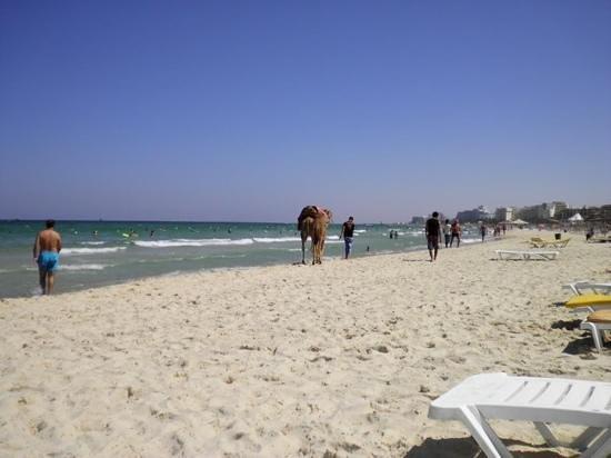 JAZ Tour Khalef Thalasso & Spa: the beach