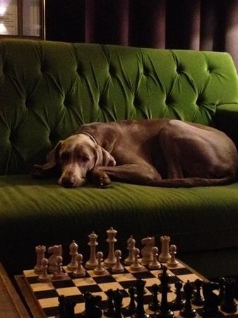 Hotel AMANO: A beautiful dog hanging out in the lobby.  One wonders if he is hoping for a worthy chess oppone