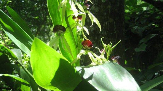 Clarissa Falls Resort : Chena's mom's orchid