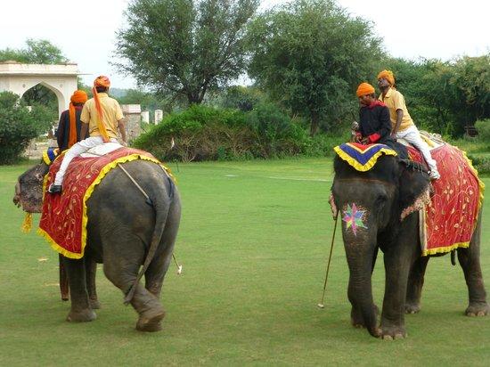 Elephant Polo at Dera Amer