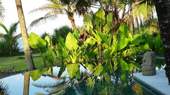 elephant ears over pool picture of sejuk beach villas mengwi rh tripadvisor com