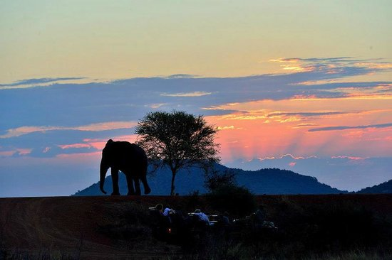Royal Madikwe Luxury Safari Lodge: Elephant at the dam