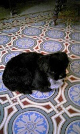 Casa Obrapia: cute dog !