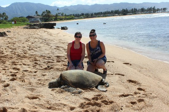 Hawaii Turtle Tours Beach