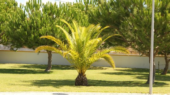 Treppen - Picture of Villas Rufino, Albufeira - TripAdvisor