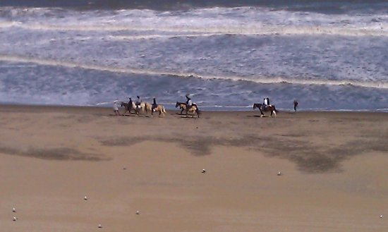 Residence Inn Virginia Beach Oceanfront: You Can Rent Horses To Ride Down The Beach