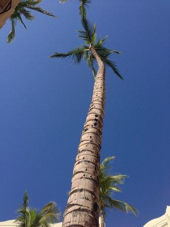 Fairmont Kea Lani, Maui: Gorgeous day