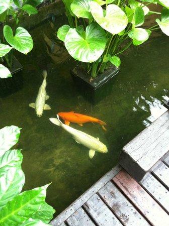 Buri Rasa Village Samui: Pond