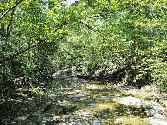 Show Me Acres: Creek
