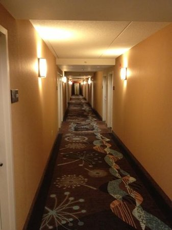 Hampton Inn by Hilton Toronto Airport Corporate Centre: clean, quiet, bright hallway