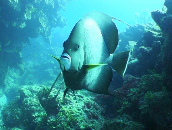 Dreamtime Dive Center: Reef scene