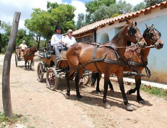 New Forest Lodge Horse Drawn Carriage Tours: Learn to drive on our farm trails