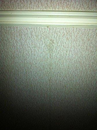 Comfort Inn Montreal Aeroport : coulisse de gras(?) sur le mur