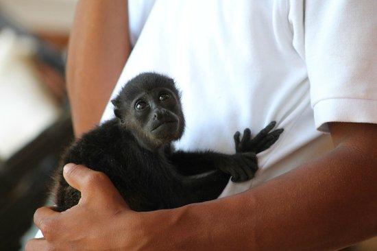Isla Palenque: A little visitor