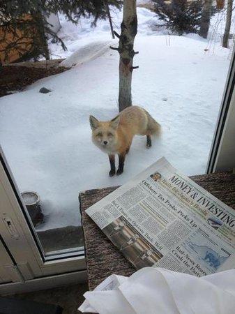 Sonnenalp: Vail Fox