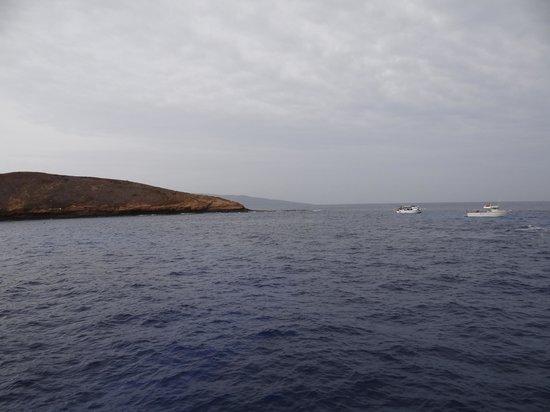 Aqua Adventures: Molokini Crater-Awesome