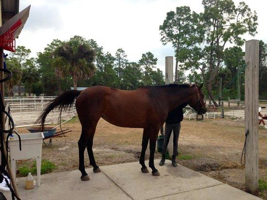 Rockin' N Stables: Horse bath