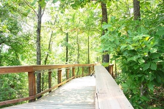 Forrest L Wood Crowley's Ridge Nature Center: paseo por el bosque