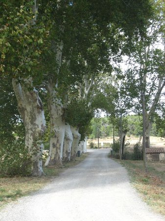 Chateau Canet: Laneway to the winery