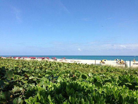 Hilton Singer Island Oceanfront/Palm Beaches Resort: Gorgeous views!