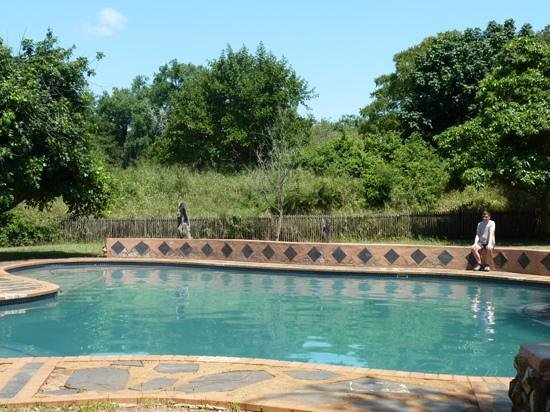 Lower Sabie Restcamp: pool at lower sabie