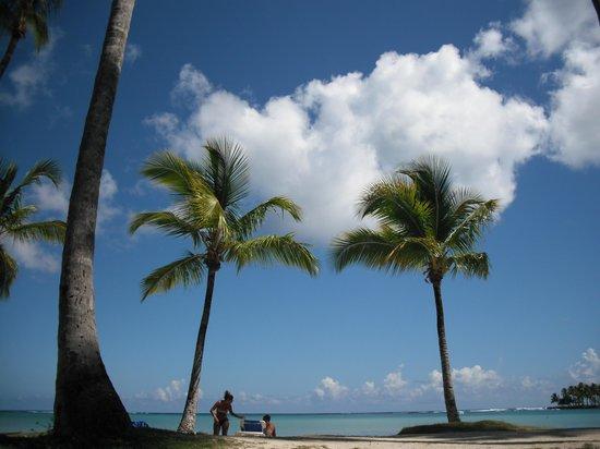 Grand Paradise Samana: Hotelstrand