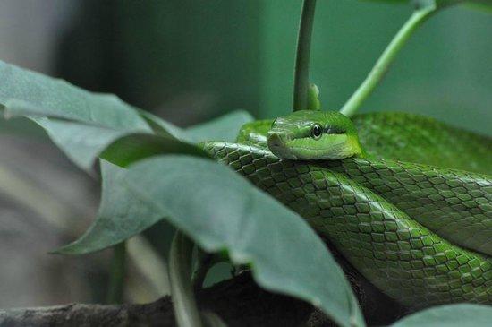 Warszawskie Zoo : Green Snake