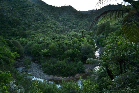 Wairua Lodge - Rainforest River Retreat: If you drive across the peninsula, you will pass through this amazing valley