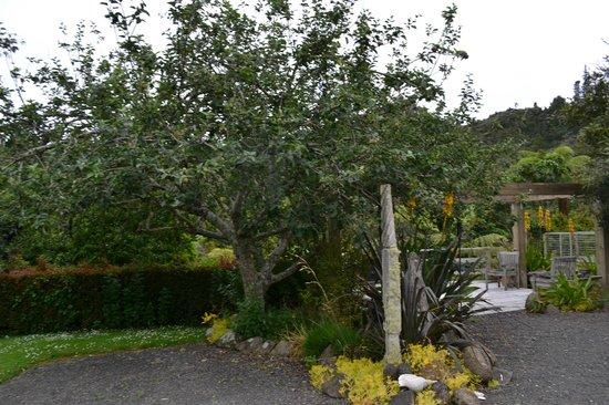 Wairua Lodge - Rainforest River Retreat: View from the main lodge
