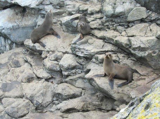 Akaroa Seal Colony Safari: Seals close