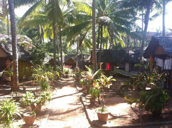 Bamboo Village: Bamboo huts