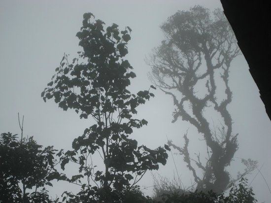 Titiwangsa Tours & Travel : Erie Mossy Forest when clouds came down