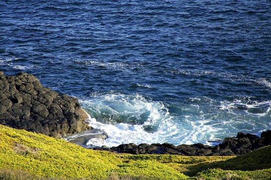 Phillip Island Nature Park: gorgeous