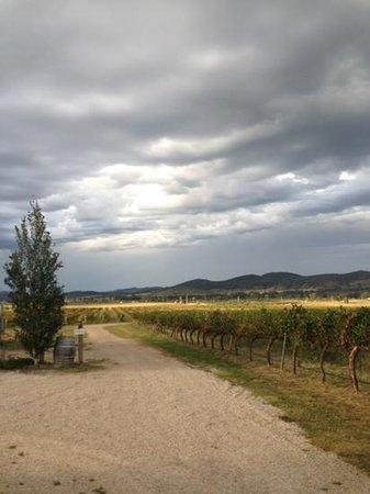 Thistle Hill Organic Winery