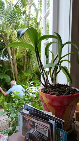 Key West Bed and Breakfast: quiet and leafy