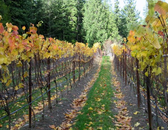 Spoiled Dog Winery: Spoiked Dog Winery in September - Gorgeous place!!!!