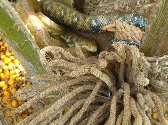 Rancho Pacifico: Boa constrictor