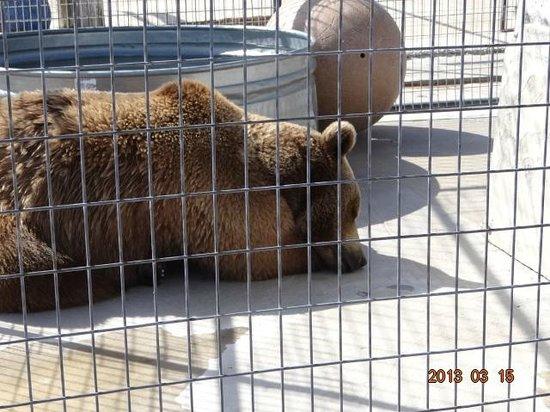 Turpentine Creek Wildlife Refuge: bear