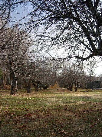 Rancho Manzana: Apple orchard in March