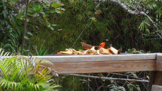 Crystal Paradise Resort: The birds are feed every morning. You get to see many varity's